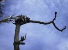 Ein Baum fällt_1