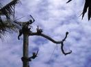 Ein Baum fällt_2