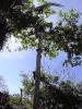 Ein Baum fällt_4
