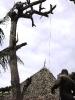 Ein Baum fällt_5