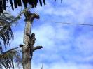 Ein Baum fällt_7